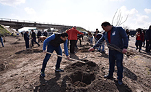 Ծառատունկ՝ Երևան-Արմավիր մայրուղու ճանապարհամերձ հատվածում